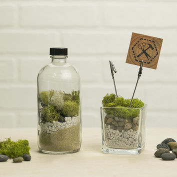 Moss Terrarium & Photo Clips Kit