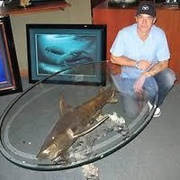 Wyland Galleries Tiger Shark Table 14 out 45.  27K retail value. MINT condition