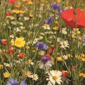 Wildflower Birds & Butterfly Mix Seeds (7g+ Seeds)