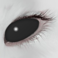 Mesmereyez Black Scleral Full Eye Coloured Contacts