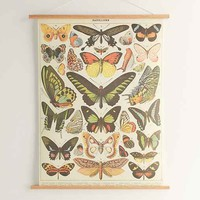 Hanging Butterfly Art Print