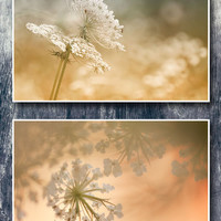 Wildnature photography, set of 2 prints, queen anne's lace photography, yellow cream gold photo prints, botanical wall decor prints, diptych