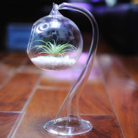 Glass Hanging Vase Planter Pot Tea Light Holder Wedding Decoration Succulent Terrarium