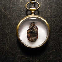 Taxidermy Bat Heart Specimen Pocket Watch Ossuary