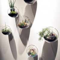 6pcs/set wall hanging glass fishbowl,wall bubble terrarium,wall glass vase for home decor,house ornament,housewarming gifts