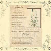 MAGICK HERB LAVENDER, Digital Download,  Book of Shadows Page, Grimoire, Scrapbook, Spells, White Magick, Wicca, Witchcraft, Herb Magic