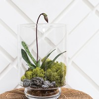 Clear Glass Terrarium Vase