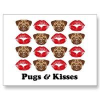 Funny Pug Postcards from Zazzle.com