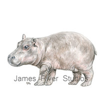 Hippo Art Hippo Painting Hippo Print Hippo Watercolor Painting Animal Watercolor Hippo Nursery Art Baby Hippo Safari Animal Hippopotamus Art