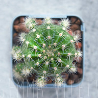 Bird's Eye View of Cactus, Rustic Home Décor, Macro Photo of Cacti, Plant Photography, Soft Pastel Art, Minimalism Photography.