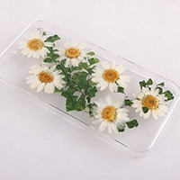 Real Dried Flower Daisy for iPhone 4s case