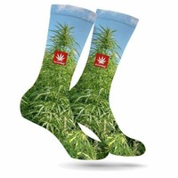 MONEY GROWS ON TREES CREW SOCKS