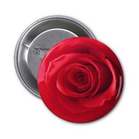 Glorious Red Rose