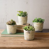 Artifical Succulents With Stamped Ceramic Pots (Set of 4)