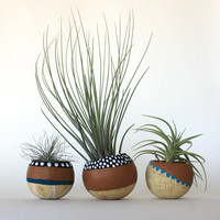 Air Plant Planter Trio with Air Plants  -  Natural, Black, White, Tan & Teal