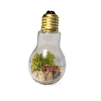 Recycled Horse Light bulb Terrarium