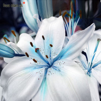 Specials Blue Heart Lily Plant Seeds Potted Bonsai Plant Lily Flower Seeds for Home Garden 50 Particles / lot