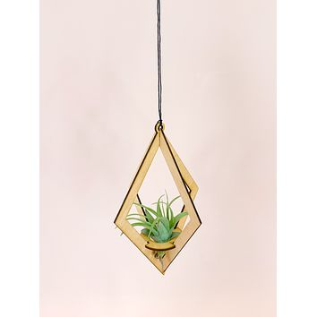 Uno | Maple Air Plant Hanger