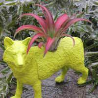 Chartreuse Wolf Planter / Air plant container / Animal Planter