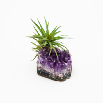 Air Plant Crystal / Amethyst and Tillandsia - Wallflower Vintage Boutique - The Mission • San Francisco