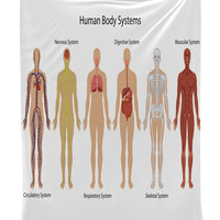 """Human Body Systems Educational Tapestry Wall Hanging Wall Tapestry - 40""""Wx60""""L - Living Room / Bedroom / Dorm Decor - One of a Kind - Machine Washable - Shiny Silky Satin"""