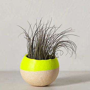 Air Plant Pod by Anthropologie