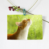 Rustic Сat Photography, fine art print, rustic sunny ginger cat, green and brown wall art home decor for cat lovers, animal photography