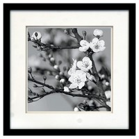 Framed Wall Poster - Blooming Branches 15x15