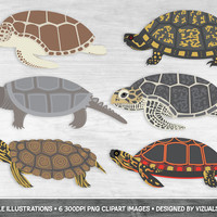 Turtle Clipart, Sea Turtles Scrapbook Tortoise Clipart, Reptile Marine Life, Loggerhead, Box, Painted, Snapping, Hawksbill Black Knobbed Map