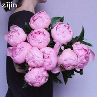 10pcs Bonsai peony flower perennial peony flowers home garden plants bonsai Chinese Paeonia Suffruticosa