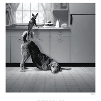 Photography Posters and Prints at Art.com