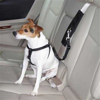 Ride Right Seat Belt Connectors - Collars, Leads & Harnesses - Leash Posh Puppy Boutique