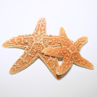 Large Sugar Starfish - Hermit Crab Food