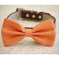 Orange Dog Bow Tie with high quality leather collar, Spring wedding