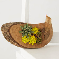 Green Yellow Succulent Decor Decoration Oval Wooden Wood Frame Base Basis Planted Succulents Home Decor Accessory Housewarming Birthday Gift
