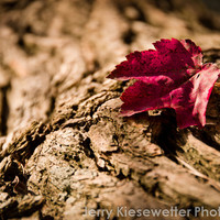 Red Leaf Photo, Nature Photograph, Maple Leaf, Botanical, Rustic, Country, Fall, Autumn, Fine Art Photo, Red Brown, Wall Decor, Home Decor
