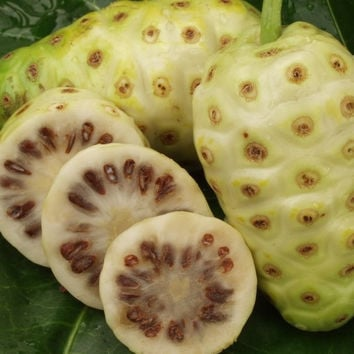 20 seeds/pack NONI Seeds Delicious Fruit seeds Morinda Citrifolia Tree Seed 5pcs Free shipping