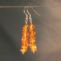 Classic honey baltic amber earrings on sterling silver