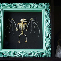 Lesser Fruit Bat Skeleton Display