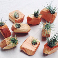 Handcrafted wooden air plant holder