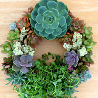 """14"""" Succulent Living Wreath Perfect Unique Holiday Gift"""