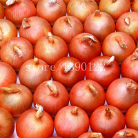 300 Giant Onion seeds Non-GMO vegetables seeds fruit seeds delicious heirloom seeds plant for home garden