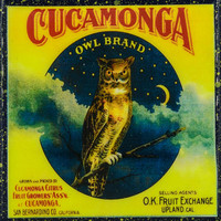 Cucamonga Owl Brand - Vintage Citrus Crate Label - Handmade Recycled Tile Coaster