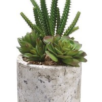 Silk Plants Direct Cactus and Succulent (Pack of 4)