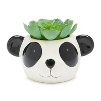 Panda Face Potted Faux Succulent