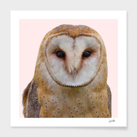 «Owl» Art Print by Suzanne Carter - Numbered Edition from $24.9   Curioos