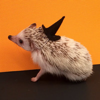 Witch's Hat critter costume
