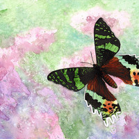 Original watercolor of green and brown Urania Ripheus butterfly (unframed) - by Savousepate