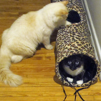 ABO Gear Fun Tunnel for Cats